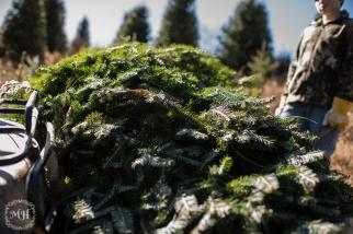 ChristmasTrees-12