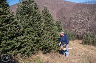 ChristmasTrees-15