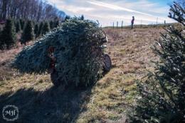 ChristmasTrees-18