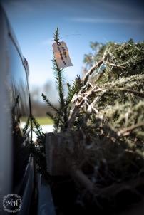 ChristmasTrees-24