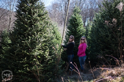 ChristmasTrees-3