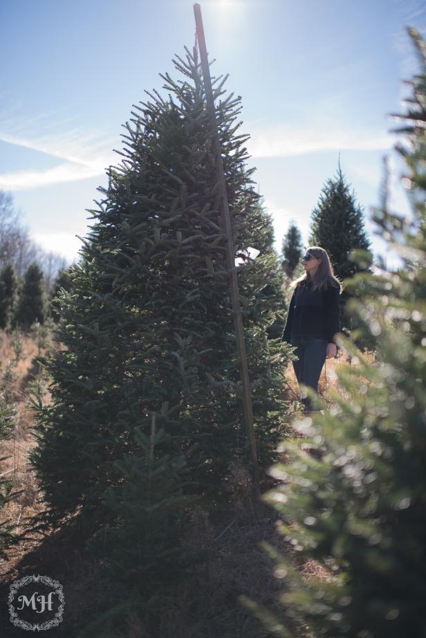ChristmasTrees-6
