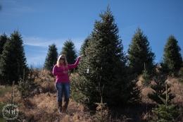 ChristmasTrees-8